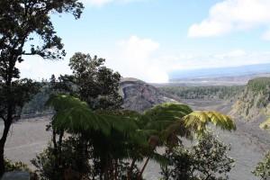 Blick vom Rand des Baumfarnurwaldes zum aktiven Vulkan Kilauea